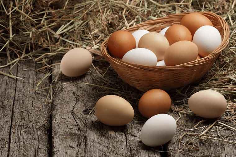 yumurta 1